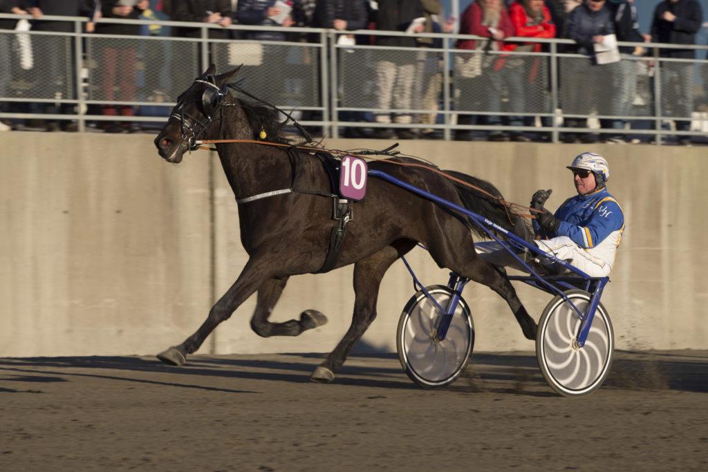 foto : roger svalsrød : momarken19032016_veijo heiskanen vant løp 8 med fridericus_foto_roger svalsrød_hesteguiden.com